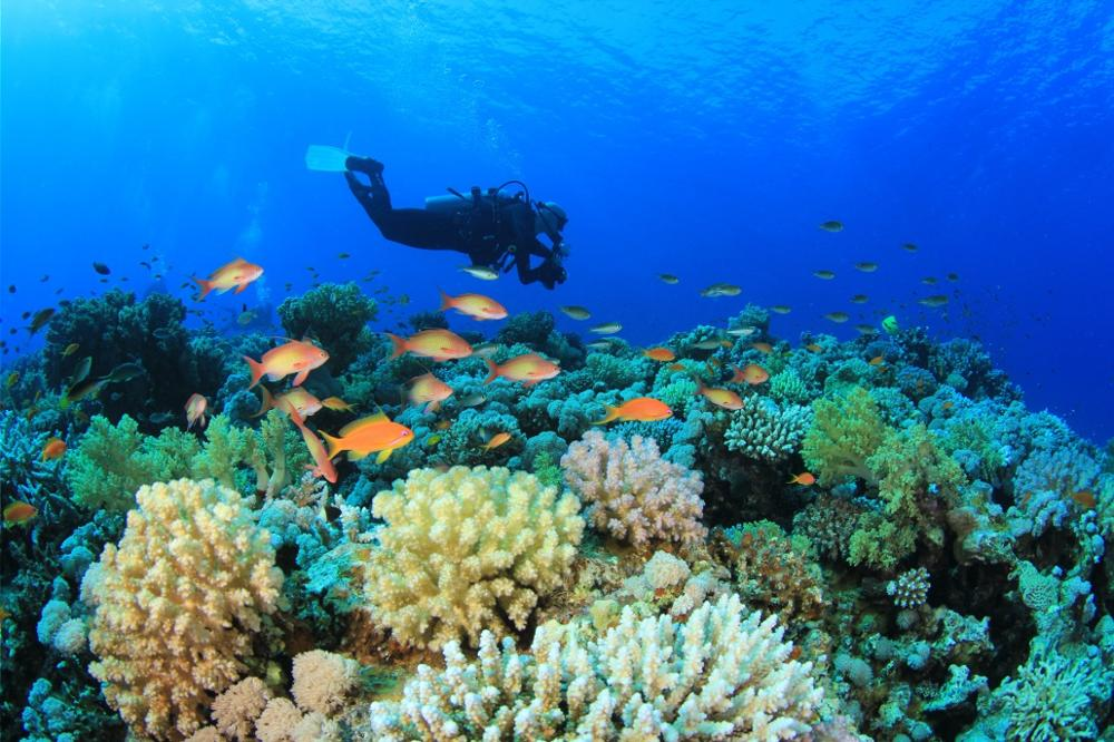 Les meilleurs spots de plongée en Thaïlande