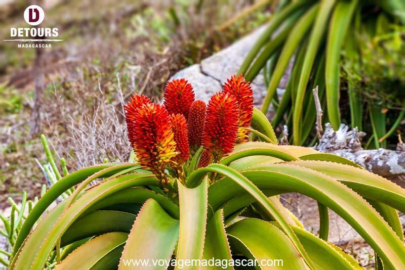 Les plantes médicinales dans le quotidien des Malgaches