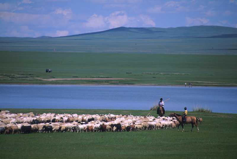 Les différents problèmes qui touchent l'agriculture en Mongolie