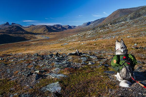 Voyager en Mongolie avec son chien