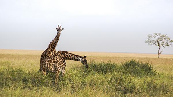 6 parcs nationaux où admirer les plus beaux animaux