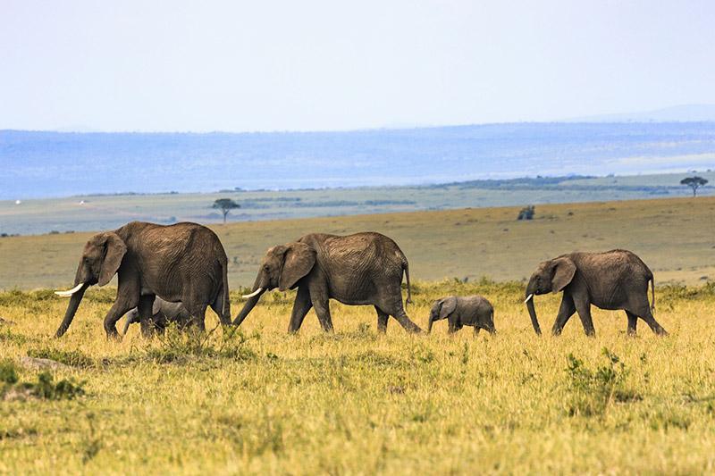 Voyager avec des enfants en Tanzanie