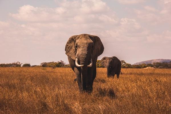 Le Big Five : tout savoir sur les animaux emblématiques des safaris